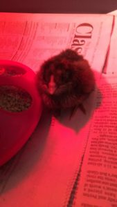 Early Learning Center baby chick