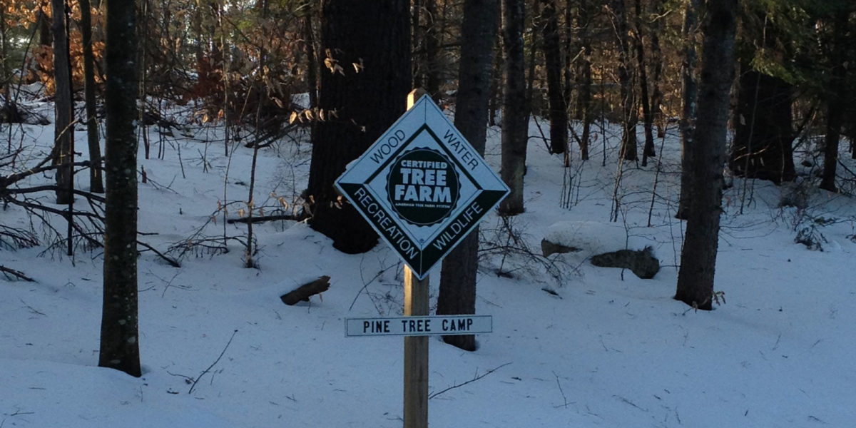 Pine Tree Camp Certified Tree Farm