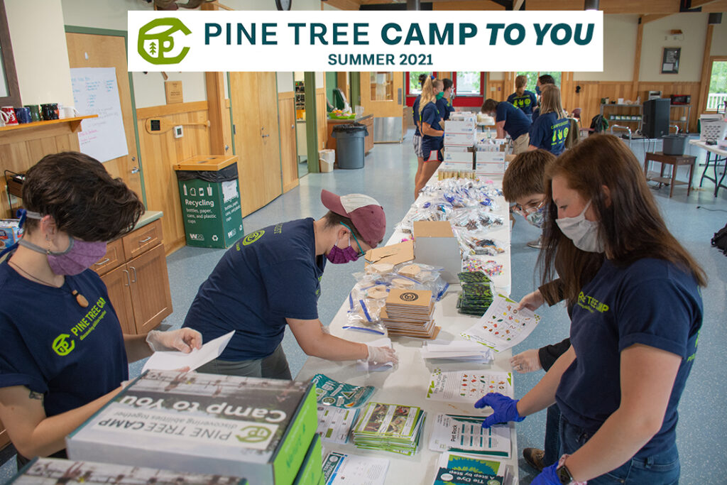 Pine Tree Camp to You Summer 2021 Graphic